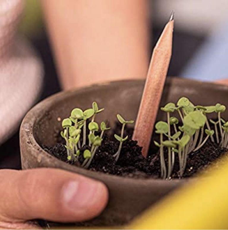 You Can Grow Plants from These Biodegradable Pencils and I Want Them