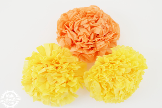 three tagetes erecta in yellow and orange displayed on a white background for the day of the dead