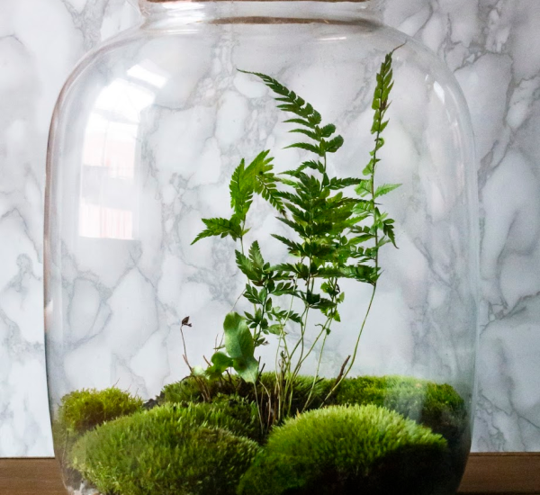 This terrarium is completely sealed. Inside, the plants stay alive and healthy due to the natural ecosystem. This terrarium is full of moss and ferns.