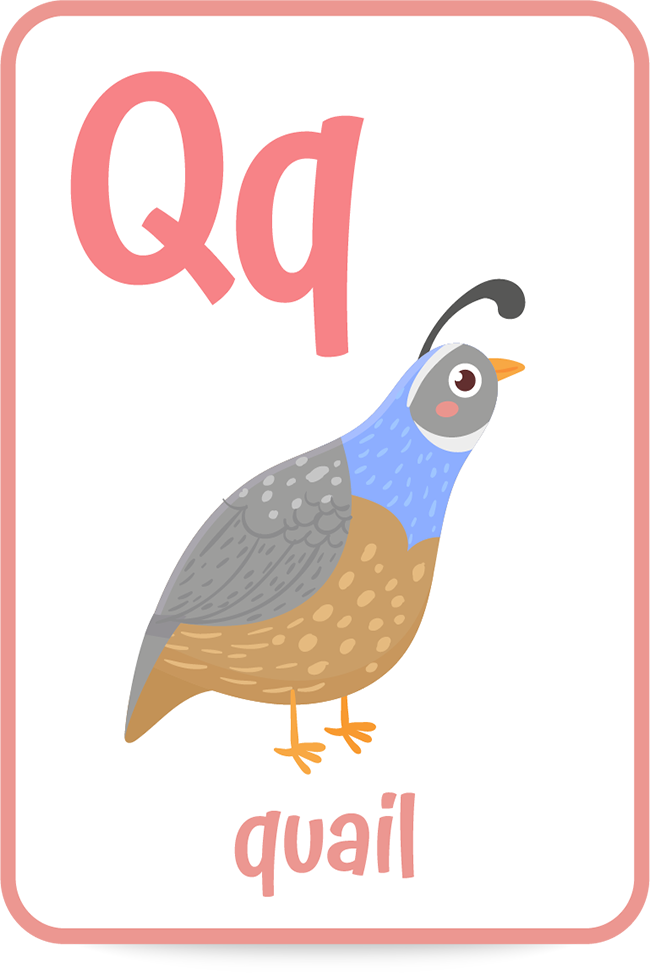Words that start with the letter Q like quail