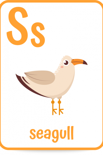 Words that start with the letter S like seagull