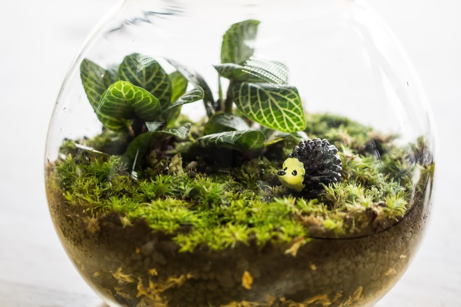 Small glass terrarium is filled with moss and tiny plants.