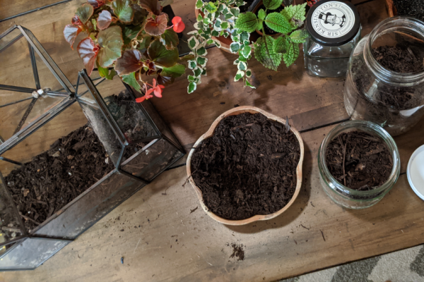 A wooden bowl of soil sits between many small glass terrariums.