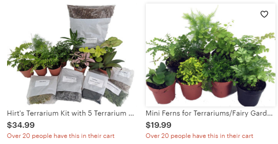 Hirt's Terrarium Kit with the perfect plants and mosses for any terrarium dreams.