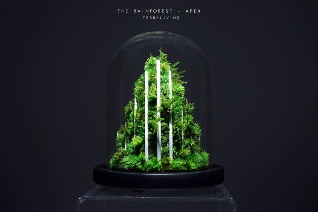 This enclosed glass ecosystem from TerraLiving is full of happy plants. This terrarium has white upright designs supporting the plants.