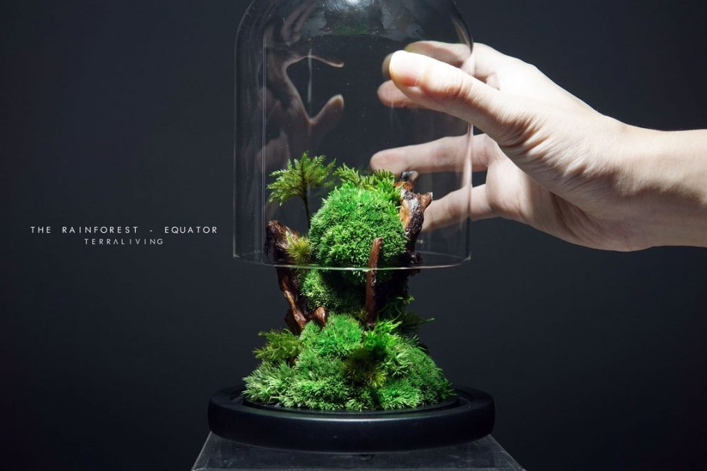 Small glass enclosed moss terrarium ecosystem from TerraLiving is vibrant and green