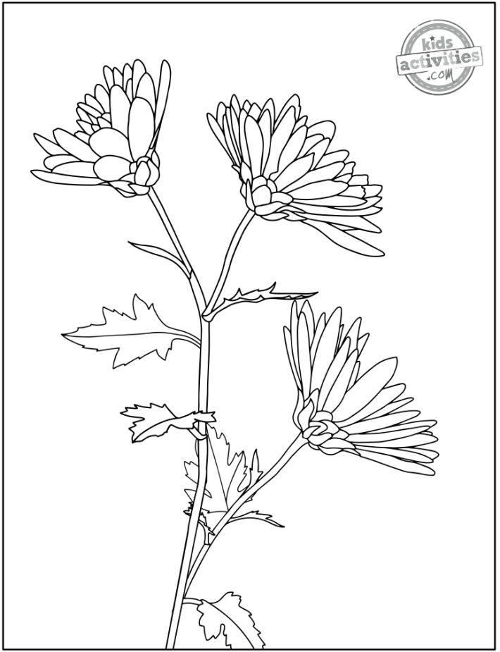 free printable flower coloring page - Aster coloring page shows black line drawing of three aster flowers on a stem with leaves
