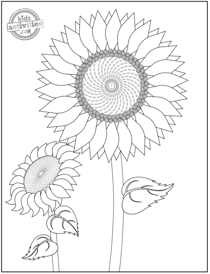 free printable sunflower coloring pages - two sunflowers shown one facing forward and very open, large stem and leaves