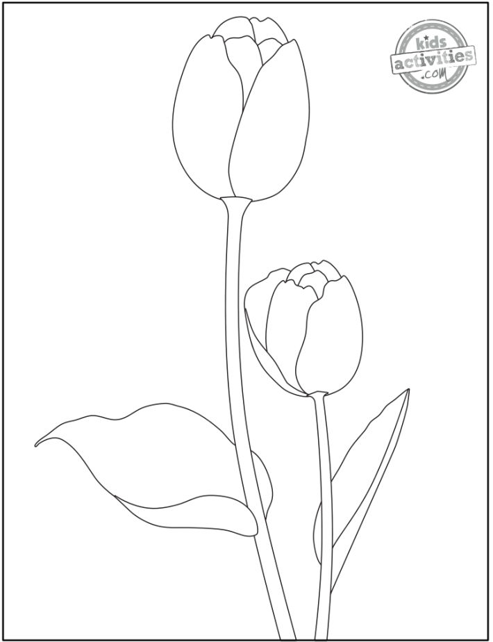free printable tulip coloring pages pdf - two tulip designs in black and white