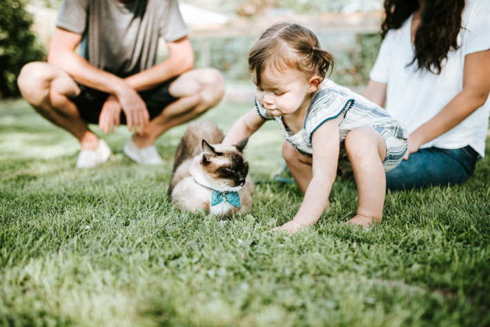 How to Be More Patient with Kids - Teaching kindness - little girl petting cat with parents nearby