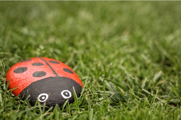 Painting rocks to look like ladybugs - this painted rock ladybug is in the grass