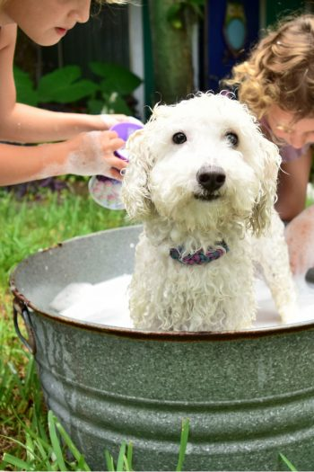 Why Chores are Important Part of Teaching Kids Responsibility - Kids Activities Blog - dog in tub being washed