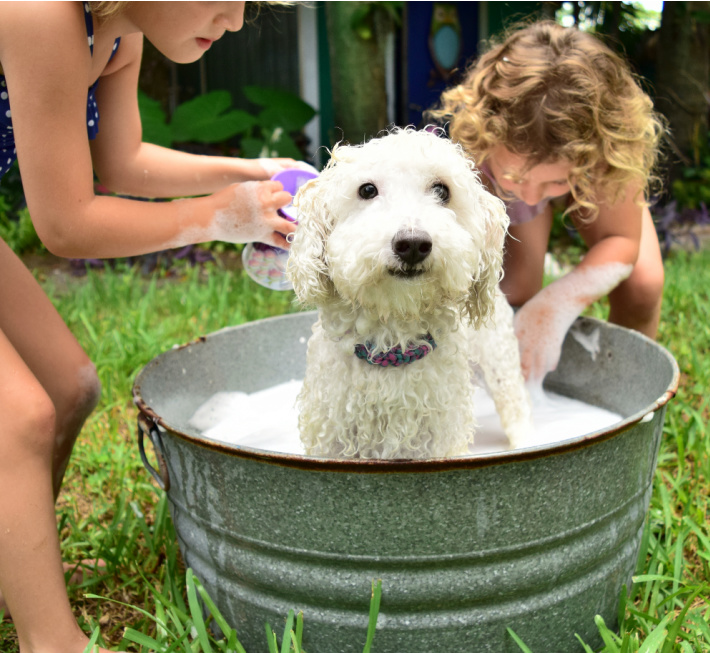 why chores are important part of teaching kids responsibility - kids washing dog in a tub in front yard