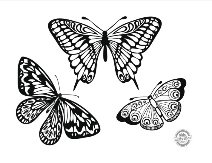 3 butterflies fluttering around coloring page in black ink - pdf screenshot
