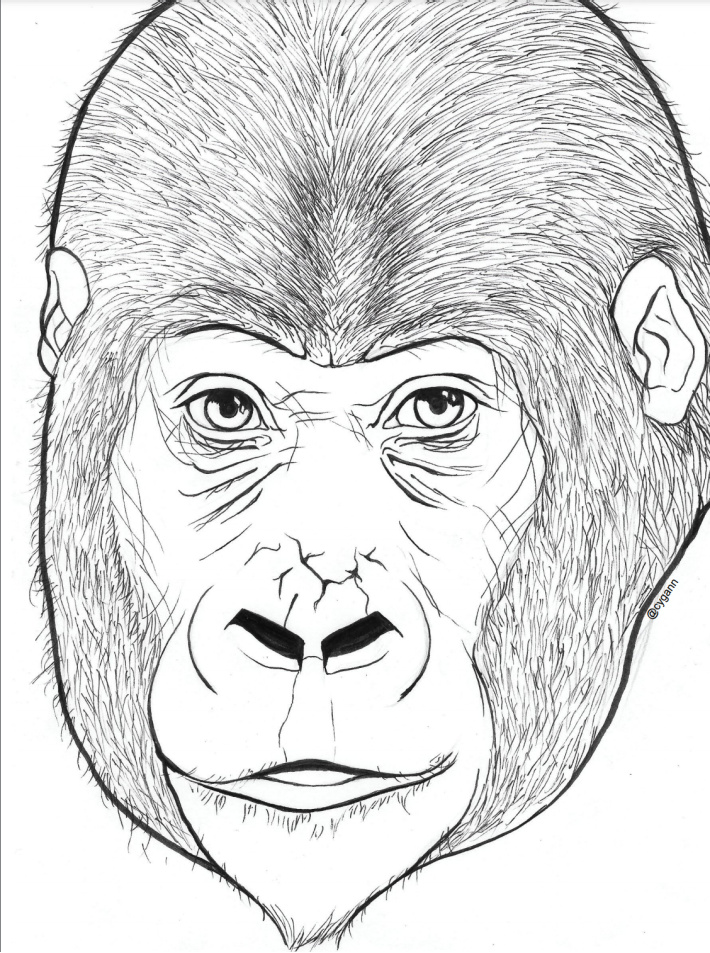 Original Gorilla Coloring Page with Coloring Tutorial - Kids Activities Blog - shown is the printable coloring page pdf screenshot