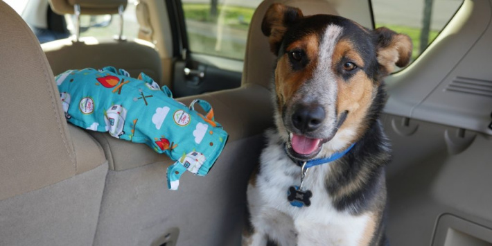 noggle takes ac air from front of car to back to cool pet - Amazon