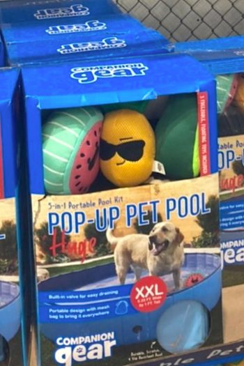 Companion Gear Pop-Up Pet Pool from Costco