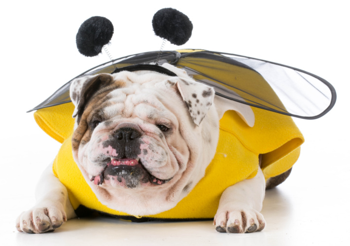 Honey Bee Costumes for the Family - Kids Activities Blog - dog in a bee costume